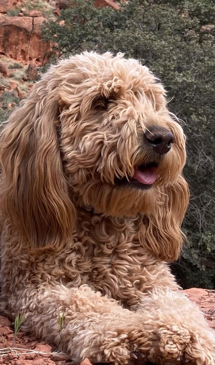 Griffey the dog